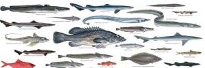 poissons-eaux-profondes508